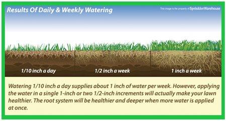 Avoid Over-Watering your Lawn