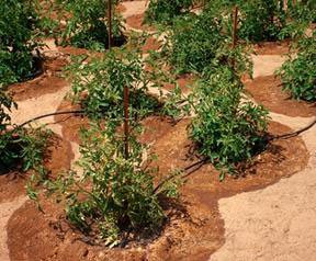 Irrigation Helps Amp Tutorials What Is A Drip Irrigation