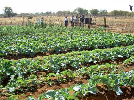to some there is a distinct difference between a drip irrigation system and a system they would categorize all lowpressure methods of